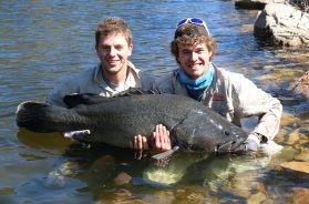burrinjuck-murray-cod-123cm-large