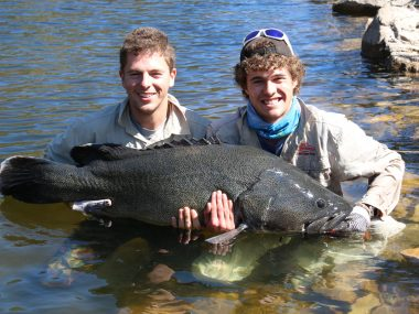 burrinjuck-murray-cod-123cm-large