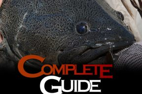 complete-guide-lure-fishing-series-murray-cod-in-dams