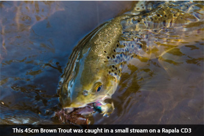 brown-trout-rapala-social-fishing