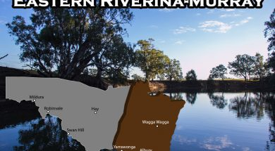 eastern-riverina-murray-fishing-report