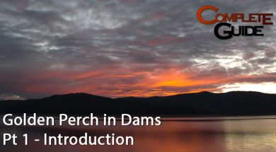golden-perch-in-dams-pt-1-introduction