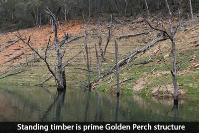 golden-perch-structure