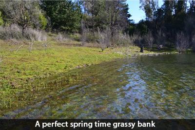 grassy-bank-dams