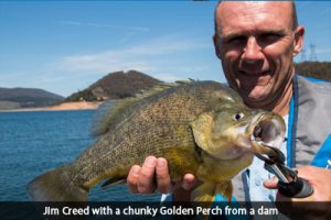 jim-creed-golden-perch