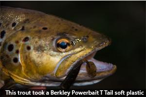 trout-social-fishing-berkley-powerbait-t-tail-soft-plastic