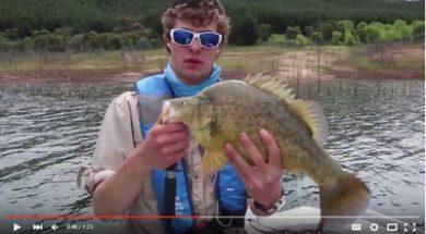 social-fishing-tip-golden-perch-water-temperature