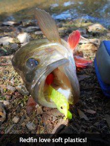 soft-plastic-redfin-jim-bob