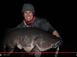 130cm-murray-cod-surface