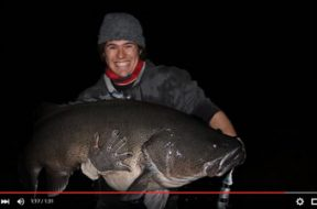 130cm-murray-cod-surface