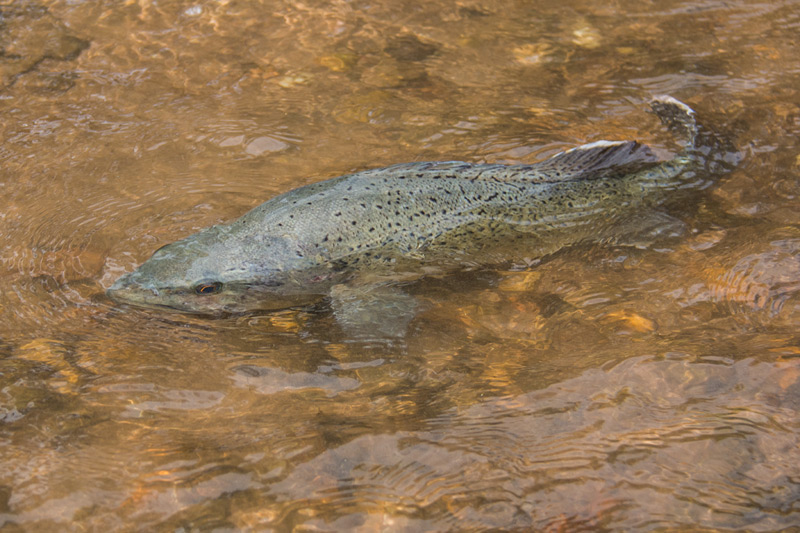 Industry Talk Introduction – Trout Cod Opening in Talbingo Dam