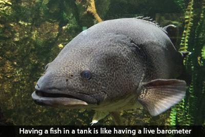 fishing-barometer