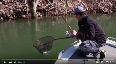 social-fishing-tips-lake-eildon-hopping-the-banks-golden-perch