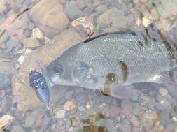 surface-bass-fishing-social-fishing