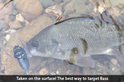 surface-bass-social-fishing