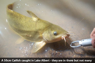 lake-albert-fishing-catfish