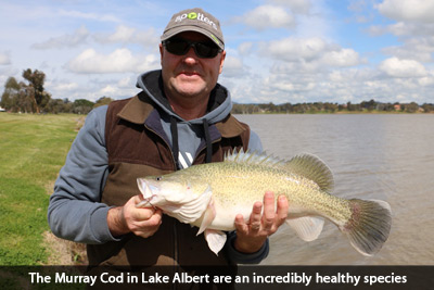 lake-albert-wagga-fishing-murray-cod