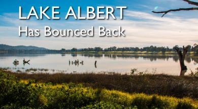 lake-albert-wagga-wagga-fishing