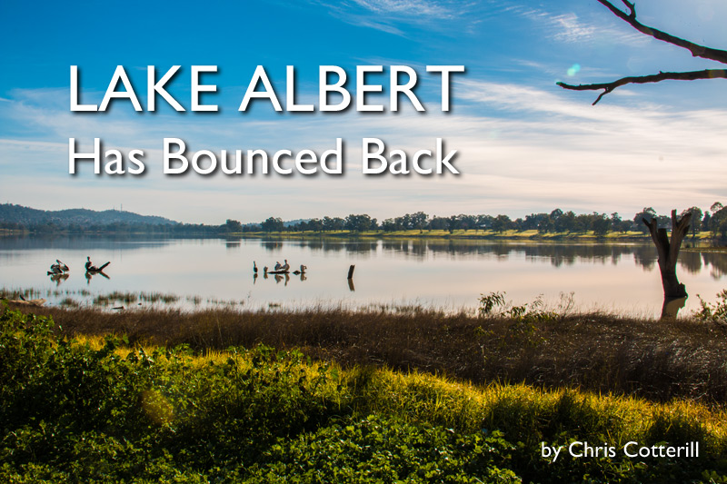 Lake Albert: Has Bounced Back!