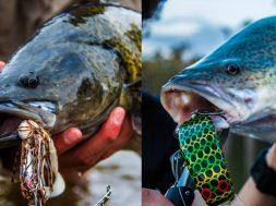 spinnerbait-v-hardbody-social-fishing