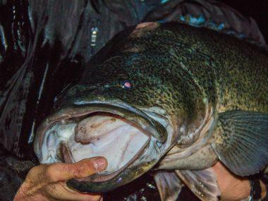 rhys-creed-social-fishing-burinjuck-cod-surface