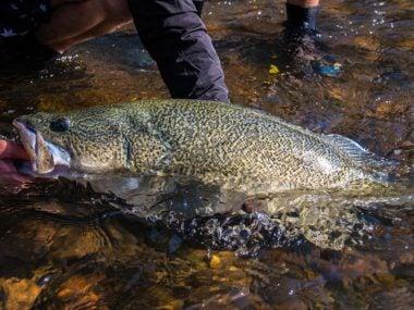 fishing-murray-cod-in-winter