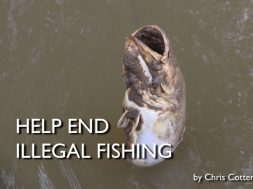 help-end-illegal-fishing