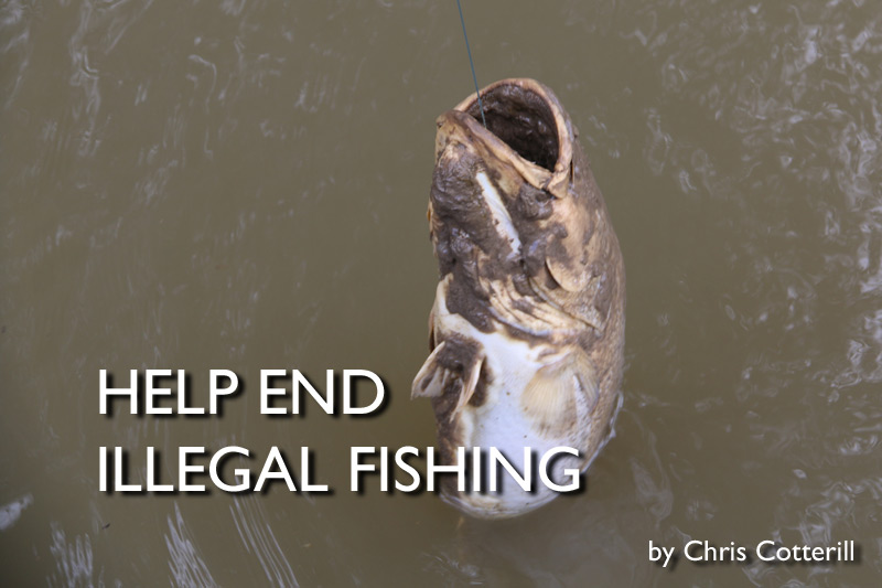 Help End Illegal Fishing