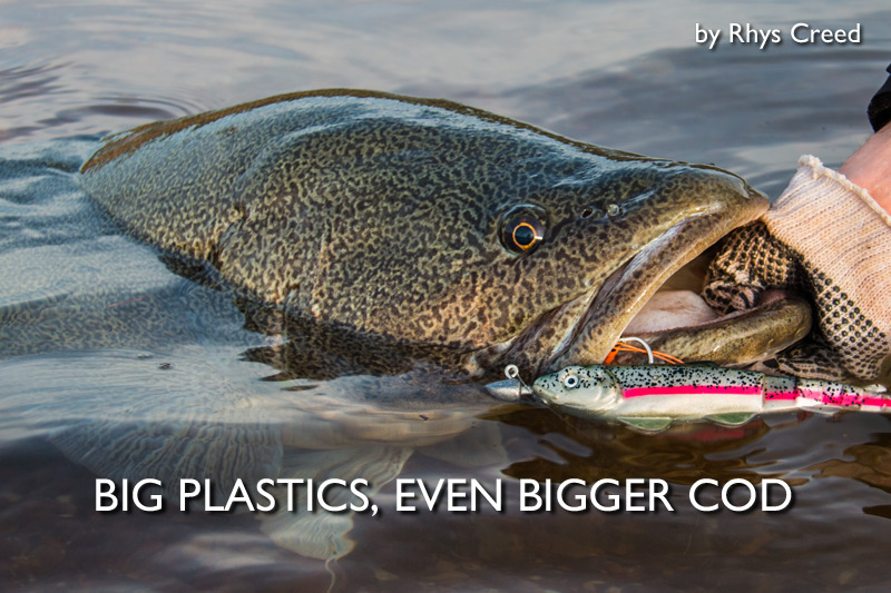 Big Plastics, Even Bigger Cod