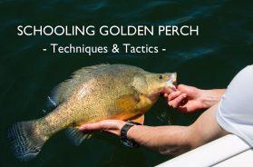 schooling-golden-perch-techniques-tactics-social-fishing