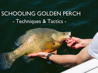 schooling-golden-perch-techniques-tactics-social-fishing