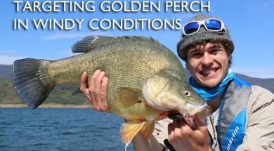 targeting-golden-perch-in-windy-conditions