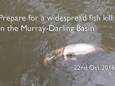 fish-kill-murray-darling-basin