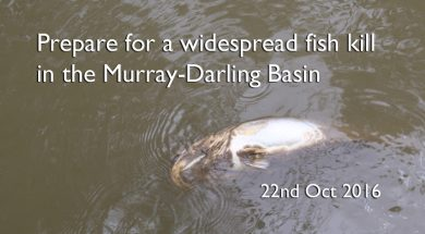 fish-kill-murray-darling-basin