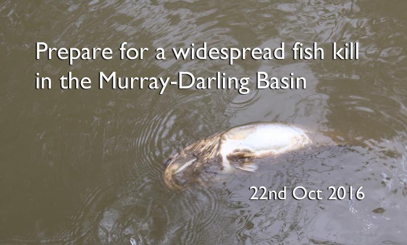 Prepare for a widespread fish kill in the Murray-Darling Basin