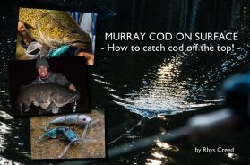 murray-cod-on-surface