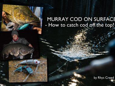 murray-cod-on-surface