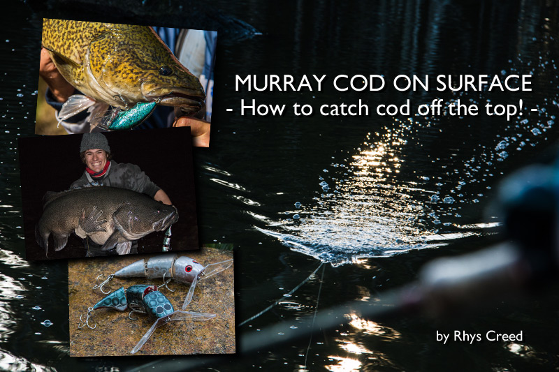 Murray Cod on Surface: How to catch cod off the top!