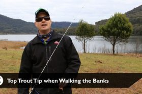 social-fishing-tip-walking-the-banks-trout
