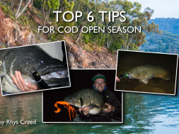 top-tips-for-cod-open-season