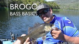 Brogo Bass Basics