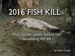 fish-kill-2016-why-did-the-fish-die