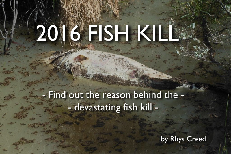 2016 Fish Kill – Find out the reason behind the devastating fish kill