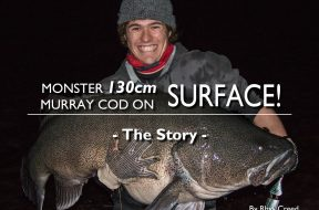 130-monster-murray-cod