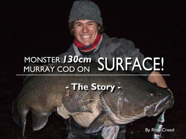 130-monster-murray-cod