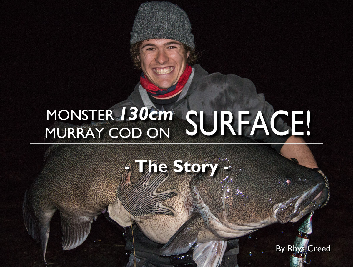 Monster 130cm Murray Cod on Surface: The Story
