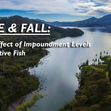 rise-and-fall-the-effect-of-water-levels-on-native-fish