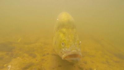 environmental-water-rhys-creed-talk