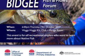 Bidgee-Fish-&-Flows-Forum—Small-Promo
