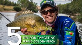 5 Tips for Targeting Spring Golden Perch